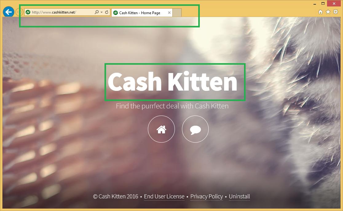Cash Kitten